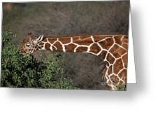 Sticking Your Neck Out Greeting Card