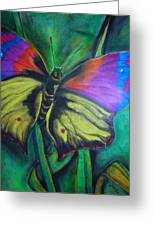 Still Butterfly Greeting Card