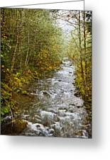 Still Creek Greeting Card