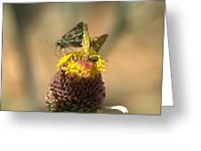 Still Plenty Of Honey Greeting Card