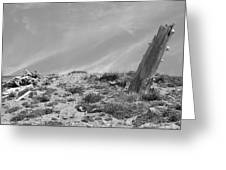 Still Standing 2012 Bw Greeting Card