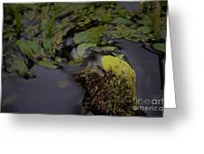 Stirring The Swamp Pot Greeting Card