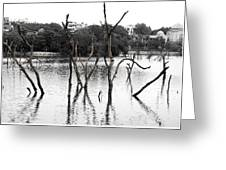 Stomps Of Trees In A Lake Greeting Card