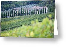 Stone Farmhouse And Vineyard Greeting Card