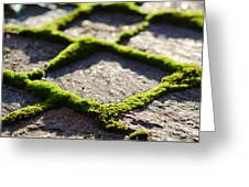 Stone Road With Green Moss Greeting Card