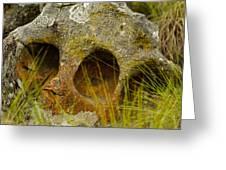 Stone Skull Greeting Card