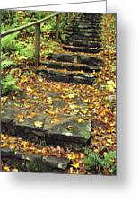 Stone Stairway In Forest, Cape Breton Greeting Card