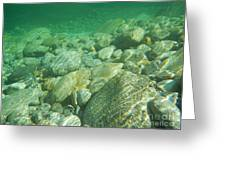 Stones Under The Water Greeting Card