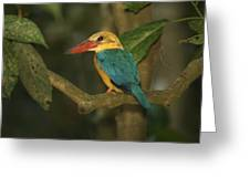 Stork-billed Kingfisher Perched Greeting Card