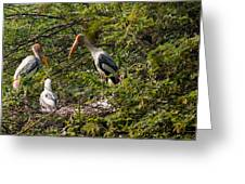 Storks Around A Nest Greeting Card