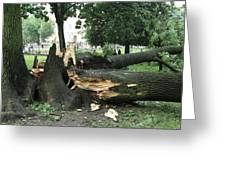 Storm Damage Greeting Card