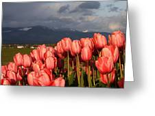 Stormin' Tulips Greeting Card