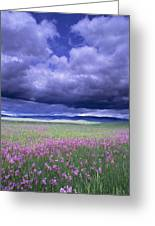 Stormy Clouds Approaching Field Of Greeting Card