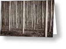 Straight Trees Greeting Card
