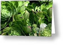 Strand Succulent Greeting Card