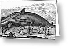 Stranded Whale, 1577 Greeting Card