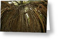 Strangler Fig Tree, Ficus Virens, Known Greeting Card