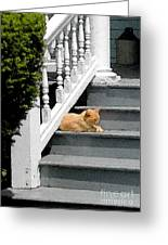 Stratford Cat Nap Greeting Card