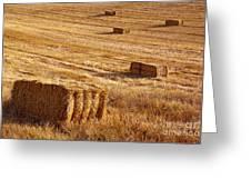 Straw Field Greeting Card