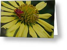 Strawberry Moth On A Yellow Flower Greeting Card
