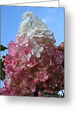 Strawberry Vanilla Hydrangea Greeting Card