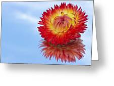 Strawflower Reflection Greeting Card
