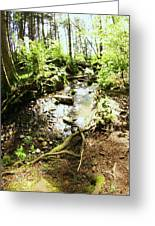Stream At Devonian Park Greeting Card