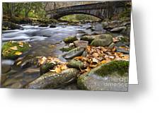 Stream In The Great Smokie Mountain National Park Greeting Card