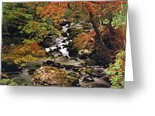 Stream Near Glengariff, Co Cork, Ireland Greeting Card
