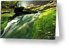 Stream Through The Moss Greeting Card