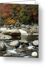 Streamside Color Greeting Card