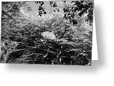 Streched Trees In Black And White Greeting Card
