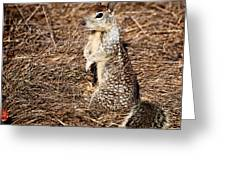 Strike A Squirrelly Pose Greeting Card