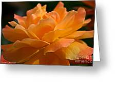 Strike It Rich Rose Greeting Card