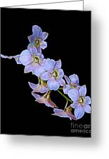 String Of Light Blue Orchids Greeting Card