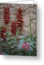 Strings Of Tomatoes Dry On A Wall Greeting Card by Tino Soriano