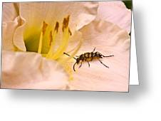 Striped Beetle On Lilly 1 Greeting Card