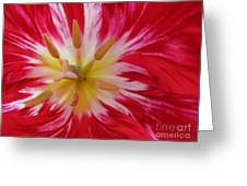 Striped Flaming Tulips. Hot Pink Rio Carnival Greeting Card