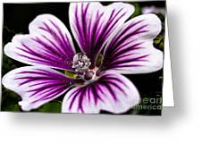 Stripped Blossom Greeting Card