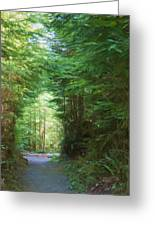 Stroll Through The Quinault Rain Forest Greeting Card