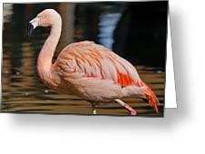 Strolling Flamingo Greeting Card