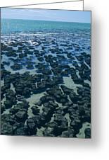 Stromatolites Greeting Card by Dirk Wiersma