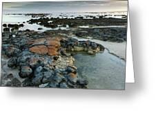 Stromatolites In Australia Greeting Card