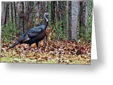 Strutting Turkey Greeting Card