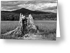 Stump In A Field Greeting Card