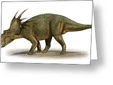 Styracosaurus Albertensis Greeting Card