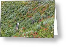 Subalpine Wildflowers Greeting Card