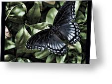 Subdued Butterfly Greeting Card