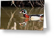 Sucarnoochee River - Suspicious Wood Duck Greeting Card