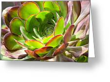 Succulant In Light Greeting Card